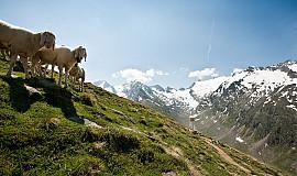Busreis naar Sölden in Oostenrijk
